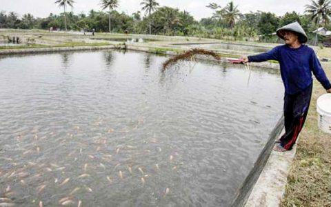 Tersus Kembangkan Potensi Ikan Air Tawar, Pembudidaya Berharap Pabrik Pakan Ikan Hadir di Kotamobagu